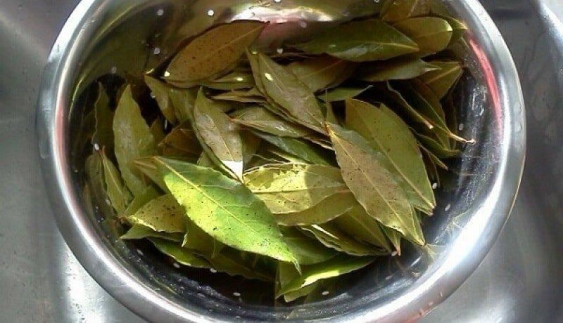 Профилактический отвар из лавровых листьев