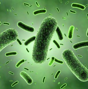 Биоценоз кишечника