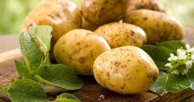 картофельное лечение