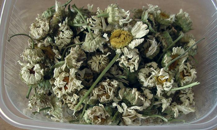Поможет вылечиться цветок ромашки
