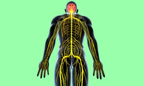 Так как крестцовое и тазовое нервные сплетения связаны между собой, то при поражении прямой кишки может болеть в области крестца и копчика