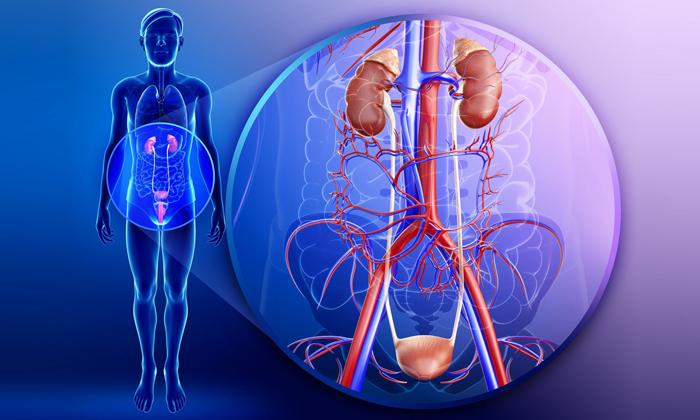 Начав лечиться нужно нормализовать кровообращение в органах малого таза