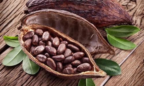 Основа масло какао – жир, который получают при переработке бобов какао-дерева
