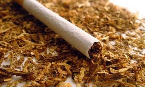 Все знают, что курение табака может вызывать различные заболевания, но мало кто может предположить, что табаком лечат от геморроя