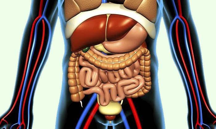Мед способен повысить иммунитет всех внутренних органов