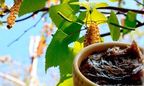 Березовый деготь – один из наиболее известных и популярных рецептов народной медицины от геморроя