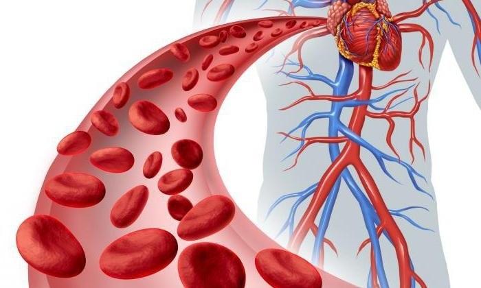 Аппарат помогает ускорить кровоток в сосудах