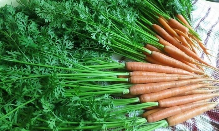 как лечить геморрой морковной ботвой