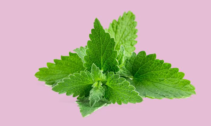 Ментол, получаемый из эфирного масла мяты