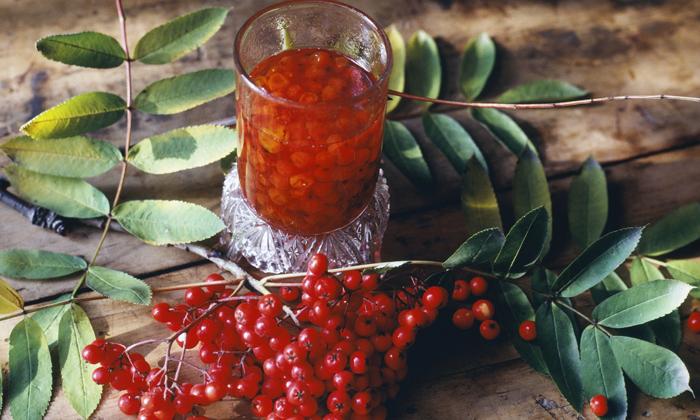 Сок рябиновых ягод смешивают с равным количеством пчелиного нектара, такой препарат помогает останавливать кровотечение и уменьшает