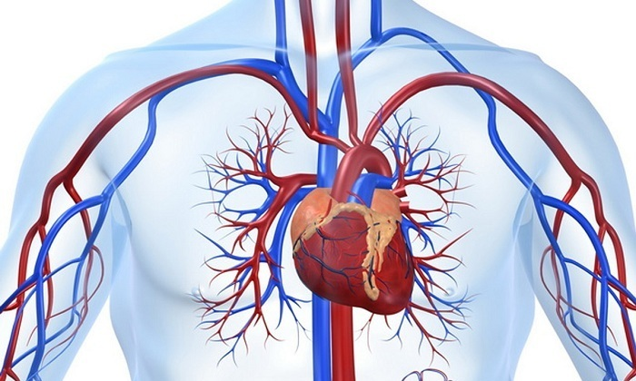 Алкоголь негативно влияет на сердце и состояние сосудов