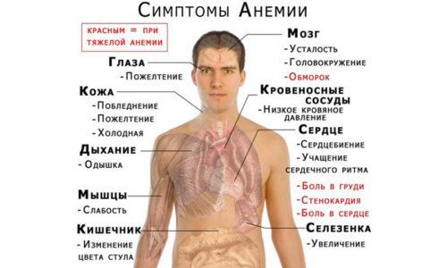 Постоянные ректальные кровотечения приводят к снижению количества эритроцитов и гемоглобина в крови