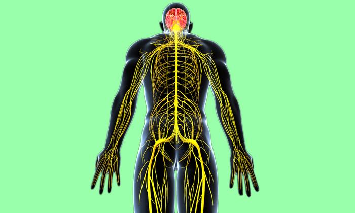 Употребляя грецкие орехи можно улучшить работу нервной системы