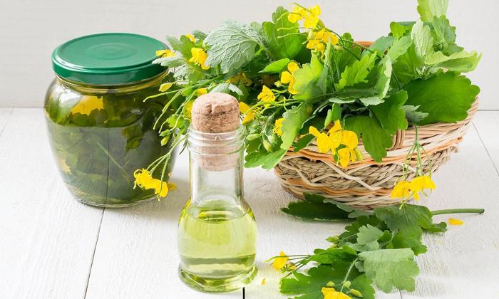 Лечение геморроя чистотелом: 6 рецептов средств и особенности применения