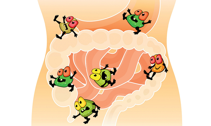 Каприловая кислота предотвращает дисбактериоз кишечника