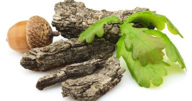 Кора дуба от геморроя: целебные свойства и народные рецепты