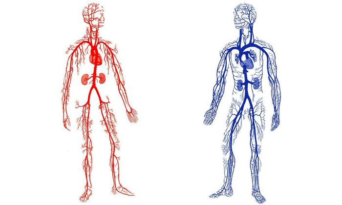 Катание на велосипеде активизирует кровообращение в организме