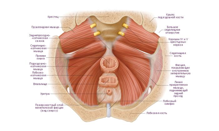 В следствие болезни начинаются дегенеративные процессы в мышечном аппарате ректума