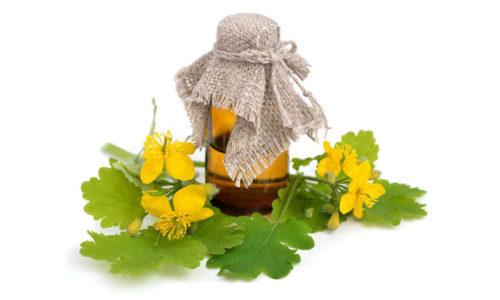 Для приготовления настоя сухие измельченные стебли и цветы засыпают в литровую банку на четверть объема и заливают кипятком