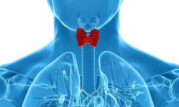 Употребляя грецкие орехи можно улучшить работу щитовидной железы
