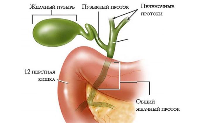 Нервное перенапряжение способствует спазму гладкомышечной мускулатуры, из которой состоят стенки желчевыводных путей