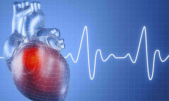 Жирные кислоты улучшают работу сердца