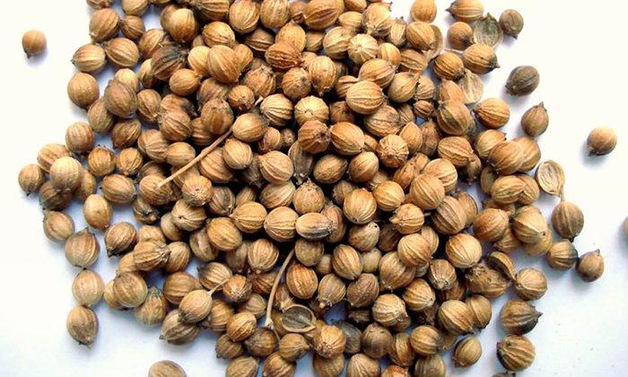 Плоды кориандра помогают снятию спазмов, действуют как обезболивающее и противовоспалительное средство, усиливают секрецию пищеварительного тракта