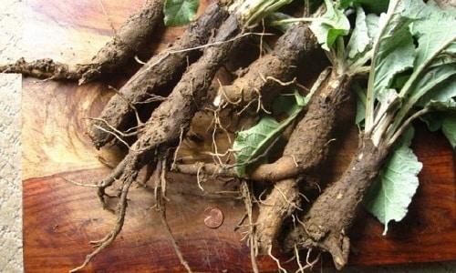Для улучшения качества половой жизни каждый день в течение месяца следует жевать кусочек корня аира