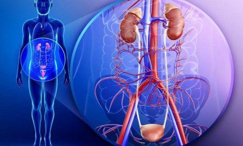 Химическое вещество выводится в виде метаболитов через мочевыделительную систему