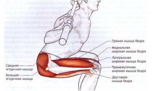 За счет приседаний улучшается осанка, прорабатываются тазовая область и ноги, мышцы пресса. Подтягиваются ягодицы, укрепляется спина, улучшается кровообращение в ногах и нижней части корпуса