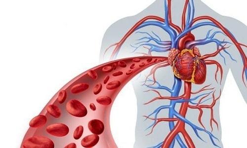 Витамины поддерживают эластичность сосудов,разжижают кровь и улучшают ее микроциркуляцию