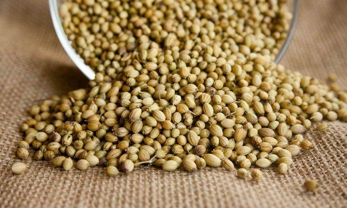 Плоды кориандра посевного содержат множество биологически активных веществ