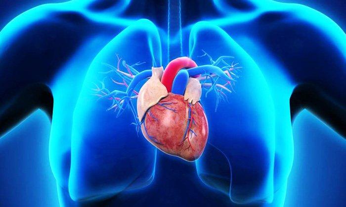 Нарушения работы сердца - причина по которой использовать глицериновую мазь нельзя