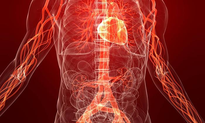 Свечи тыквеол отличаются высоким содержанием фосфолипидов, отвечающих за свертываемость крови и регенерацию тканей
