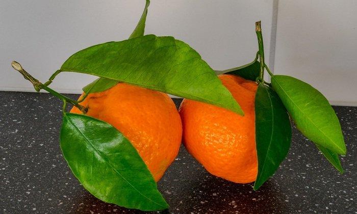 Большое количество вещества Диосмина содержится в цитрусовых. Листья и плоды производят данное вещество
