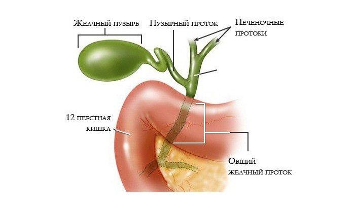 Лекарство принимают при дискинезии желчевыводящих путей