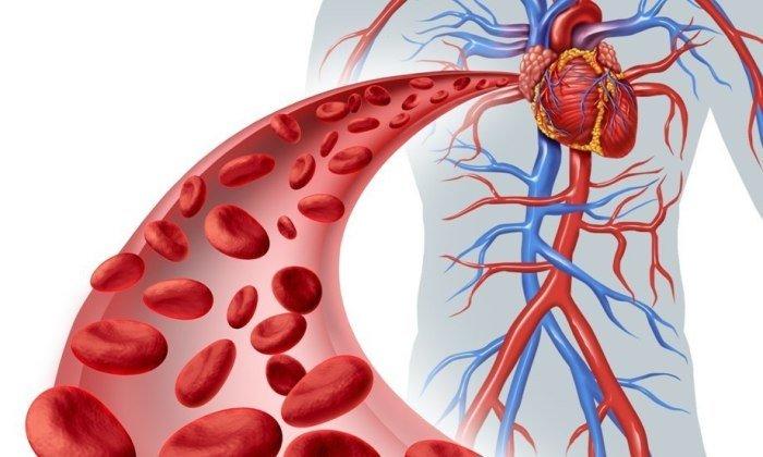 После применения геля происходит понижение ломкости и проницаемости капилляров