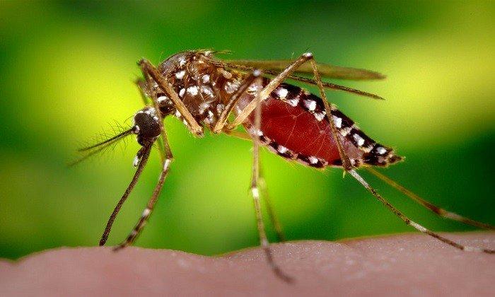 Применяется препарат и для отпугивания насекомых