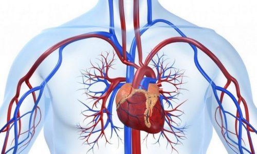 Раствор новокаина понижает возбудимость сердечно-сосудистой системы