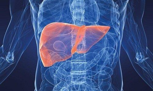 Действующие соединения препарата (трибенозид и лидокаин) трансформируются в печени
