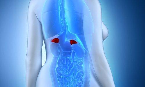 Гидрокортизон - гормон, который продуцируется корой надпочечников
