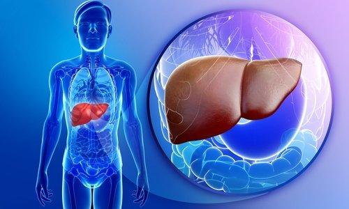 Метаболизм гидрокортизона происходит в печени