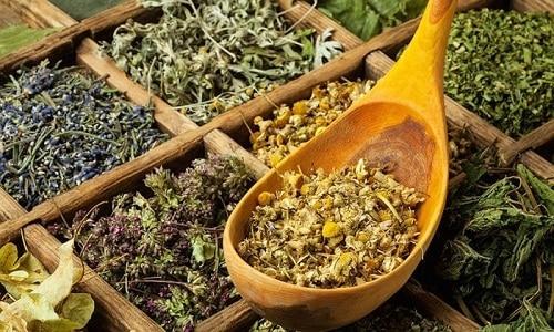 Наряду с медикаментами при рецидиве простатита могут использоваться целебные травы каланхоэ, чистотел, родиола розовая, пырей