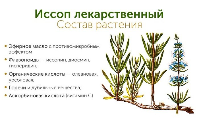 Трава иссоп также содержит компонент Диосмина