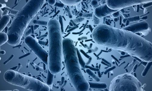 Streptococcus thermophilus и другие йогуртовые культуры в составе препарата способствуют улучшению пищеварения