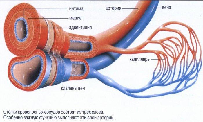Рутин назначается при поражение капилляров от длительного приема антикоагулянтов и аспирина
