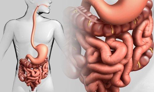 Пробиотик регулирует деятельность ЖКТ при нарушении баланса микрофлоры