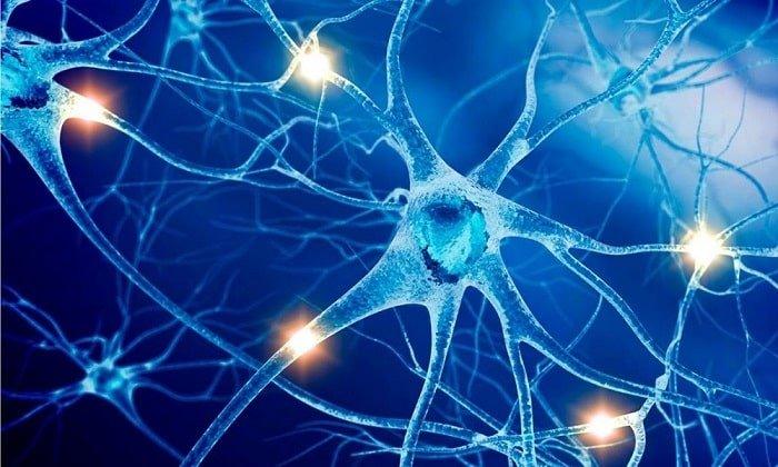 Обезболивающее действие лидокаина обеспечивается подавлением импульсов, идущим по нервным окончаниям афферентного типа