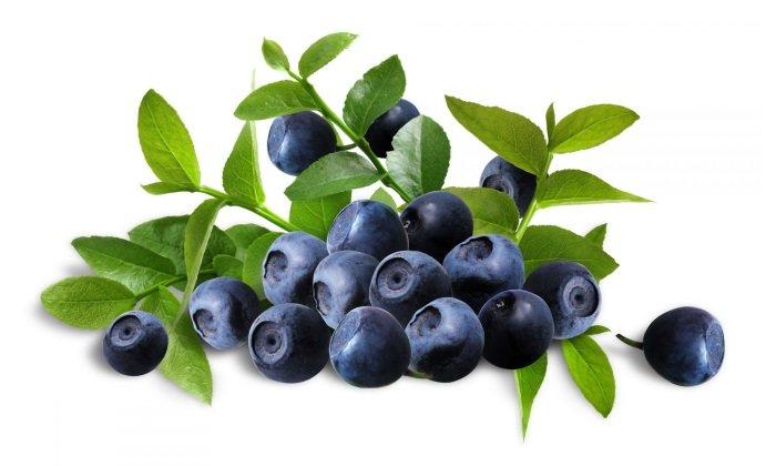 В состав также входят ягоды черники, фитонциды, сапонины, дубильные соединения, органические кислоты, эфирные масла