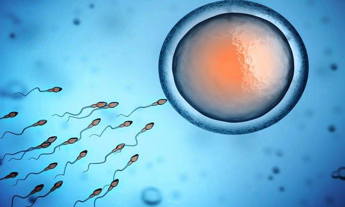 Способность регулировать активность половых желез и повышает активность сперматозоидов также свойственна цинка